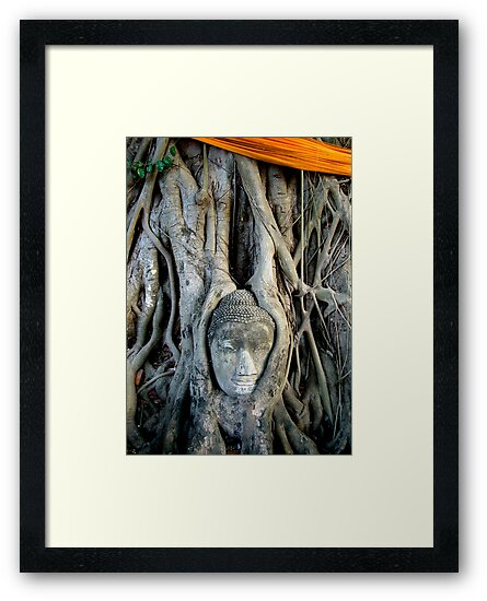 Buddha Face In Tree by Dave Lloyd