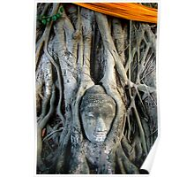 Buddha Face In Tree Poster