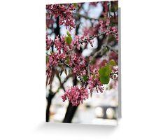 Judas Tree Greeting Card