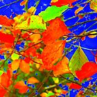 Autumn Leaves by Pauline Jones
