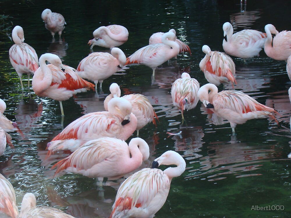 Pink flamingos by Albert1000