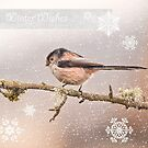 Winter Wishes by M.S. Photography/Art