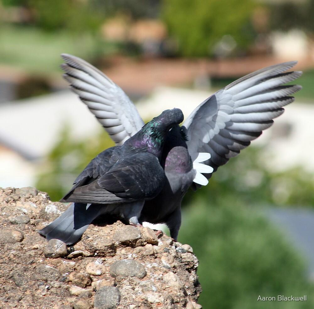 Birds In Love by Aaron Blackwell
