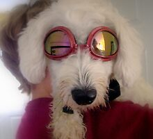 """my dog being cool or  """"Nope, don't like em! by martinilogic"""