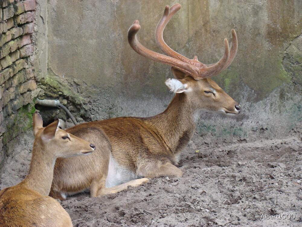 Deer. by Albert1000
