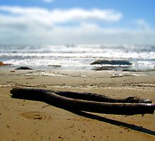 Driftwood by Coralie Alison