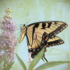 Butterfly Dream by Susan Werby