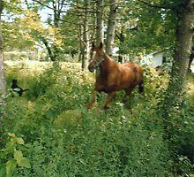 My Moochie running through the yard by VCorb0328