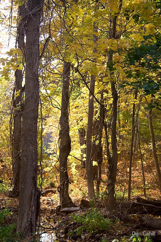 Fall Grove by Dan Cahill