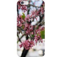 Judas Tree iPhone Case/Skin