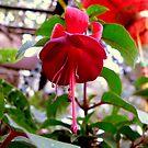 Fuchsia I by Tom Newman