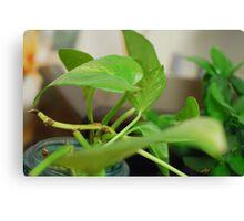Green Plant 1 Canvas Print