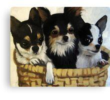 Chihuahua Lovin - dog portrait animal art Canvas Print