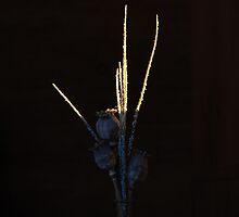Poppy Pods by puliarf