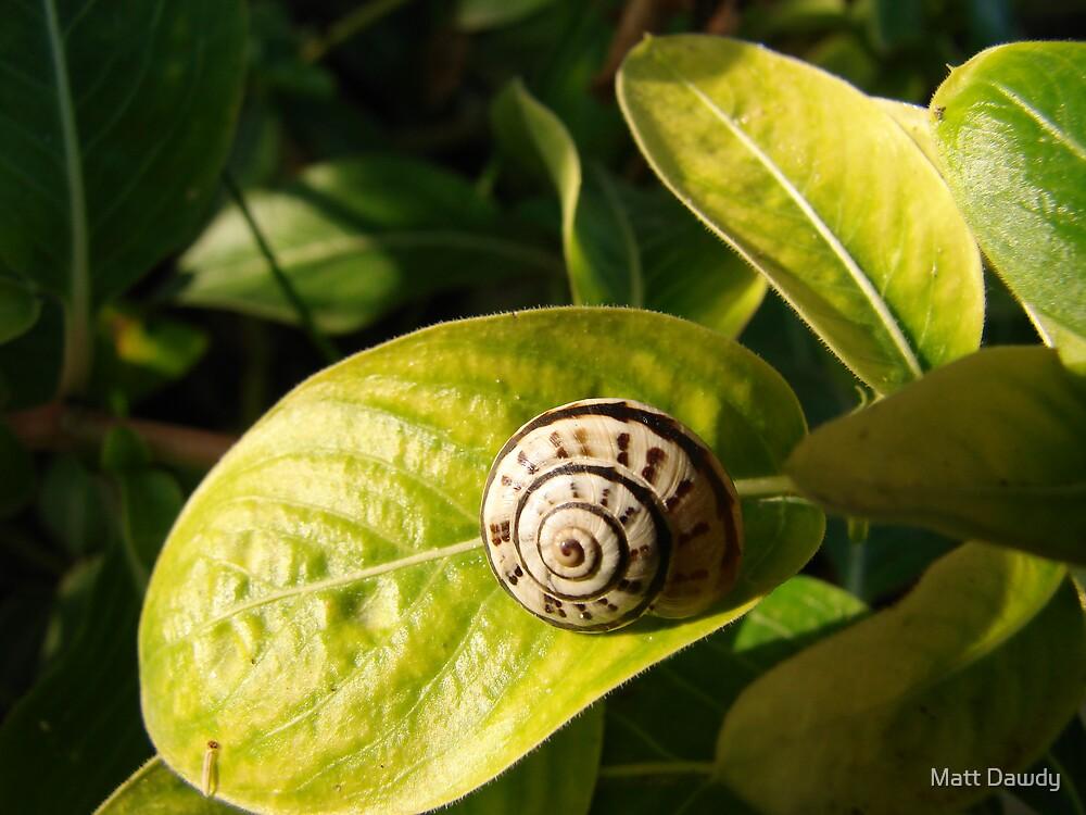 Snail on a leaf by Matt Dawdy