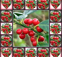 Red Berries Collage by MidnightMelody