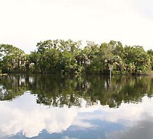 Calm Day on The Homosassa River, FL  by matthewsw1