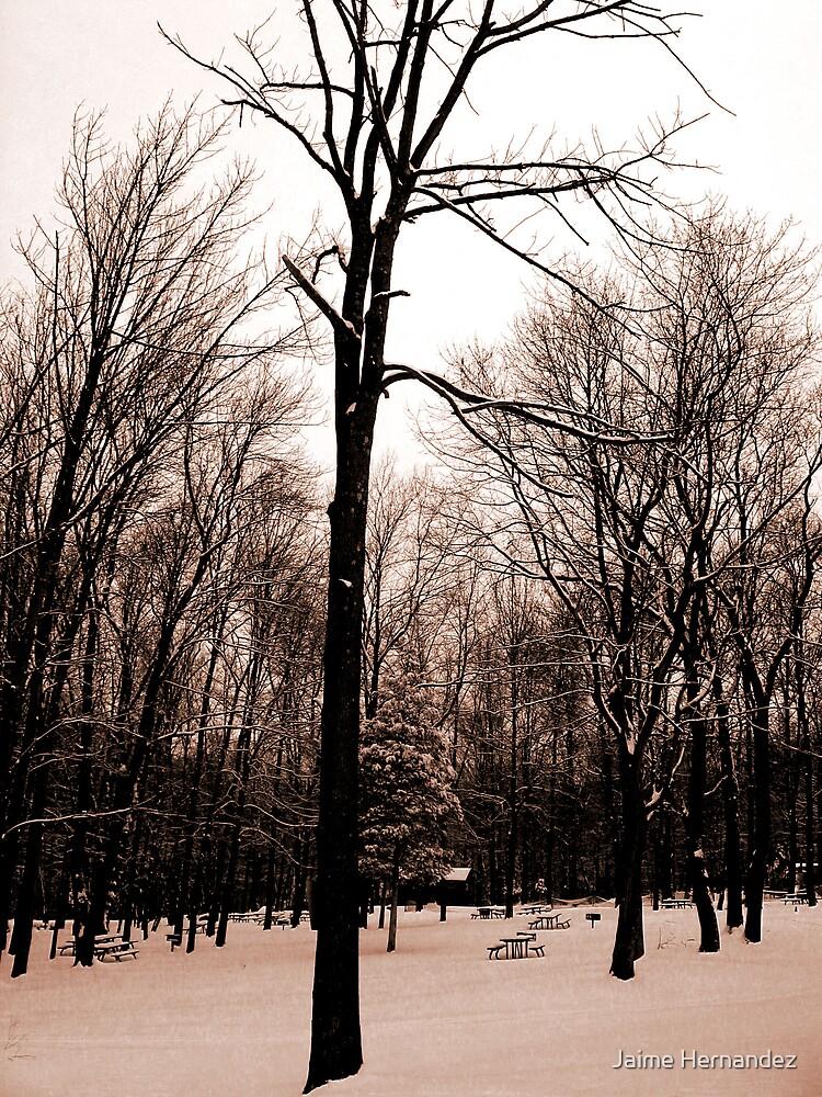 Winter by Jaime Hernandez