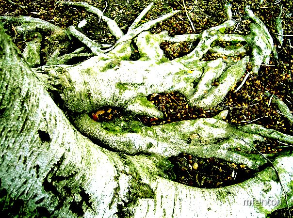 Roots by mfenton