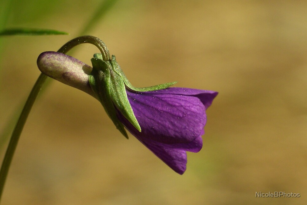 Purple Love by NicoleBPhotos