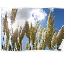 Pampass grass Poster