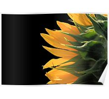 Sunflower Back Poster