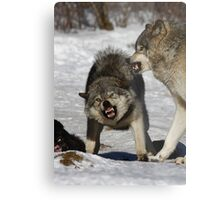 Back off! - Timber Wolf Metal Print