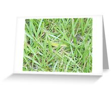 Anole in Camouflage Greeting Card
