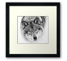 Wolf Eyes - Timber Wolf Framed Print