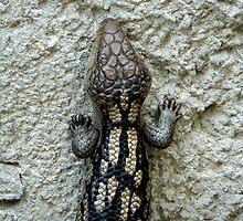 Blue-Tongued Lizard by margotk