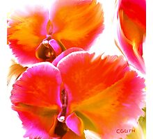 Orchids Ablaze Photographic Print
