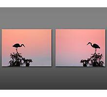 Facing Herons Photographic Print