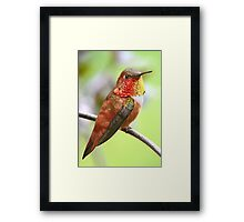 My Rufous Friend Framed Print