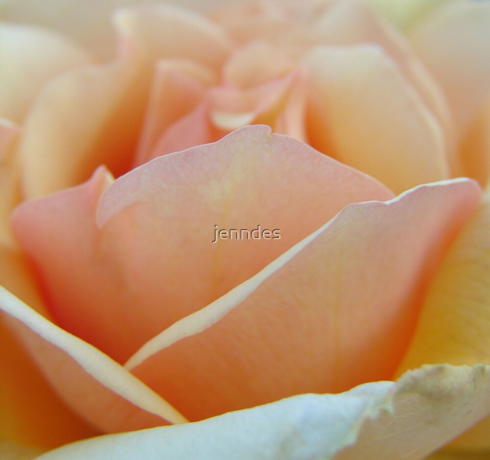 Pale Pink Petals by jenndes