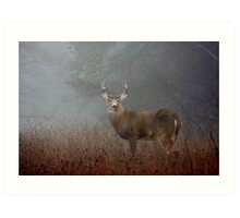 Big Buck - White-tailed deer Art Print