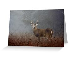 Big Buck - White-tailed Buck Greeting Card