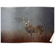 Big Buck - White-tailed deer Buck Poster