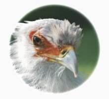 Secretary Bird / Sekretär by Thomas F. Gehrke