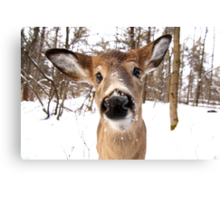 Nosey - White-tailed Deer Canvas Print