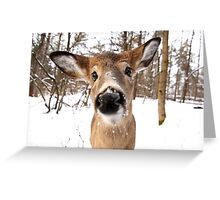 Nosey - White-tailed Deer Greeting Card