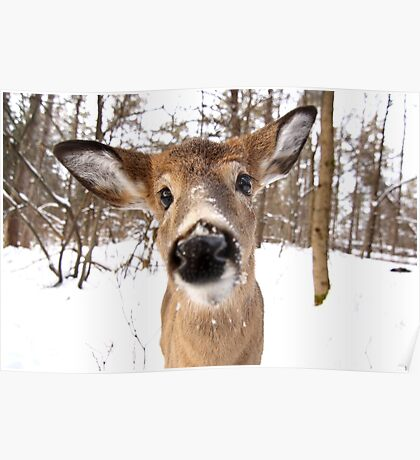 Nosey - White-tailed Deer Poster