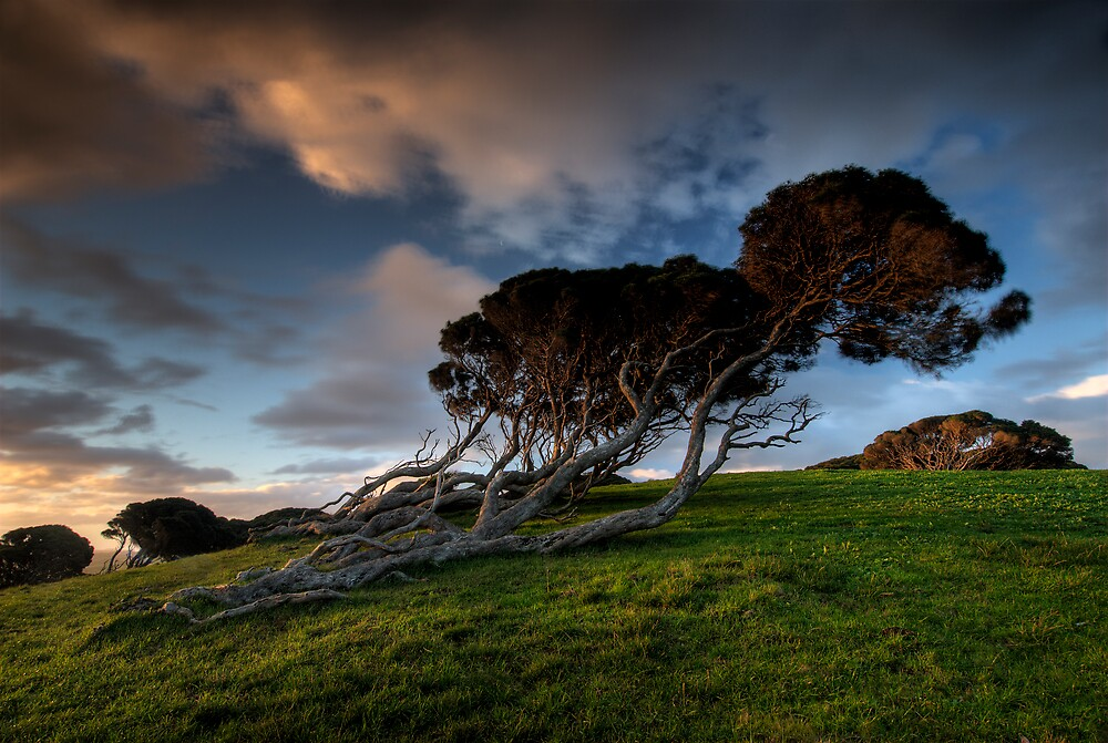 Wind Blown Hillside by Robert Mullner