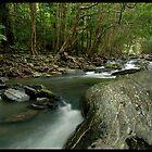 Tropical Spring Creek by Robert Mullner