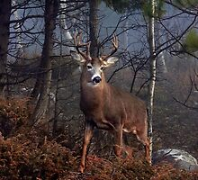Buck on ridge - White-tailed Deer by Jim Cumming