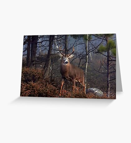 Buck on ridge - White-tailed Deer Greeting Card