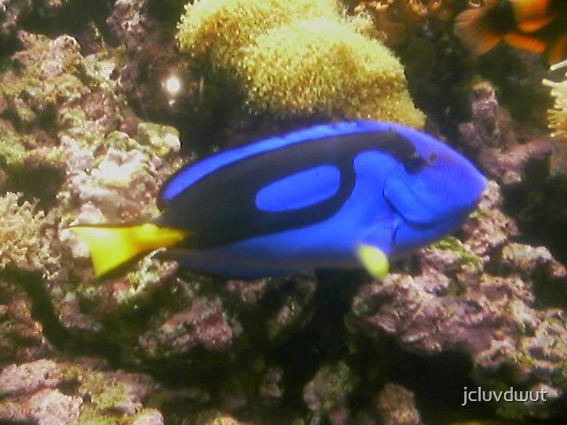 Fish by jcluvdwut