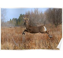 Through the Air - White-tailed Buck Poster