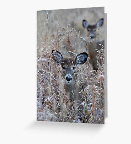 In the Meadow - White-tailed deer Greeting Card