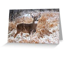 A Regal Stance - White-tailed deer Buck Greeting Card