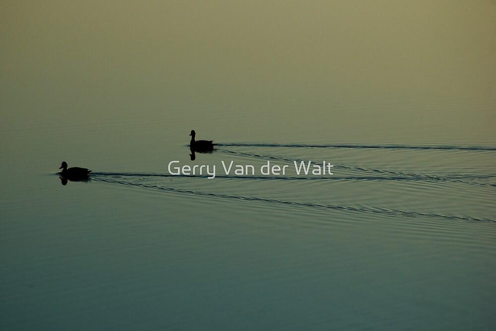 Red Billed Teal on Dam by Gerry Van der Walt